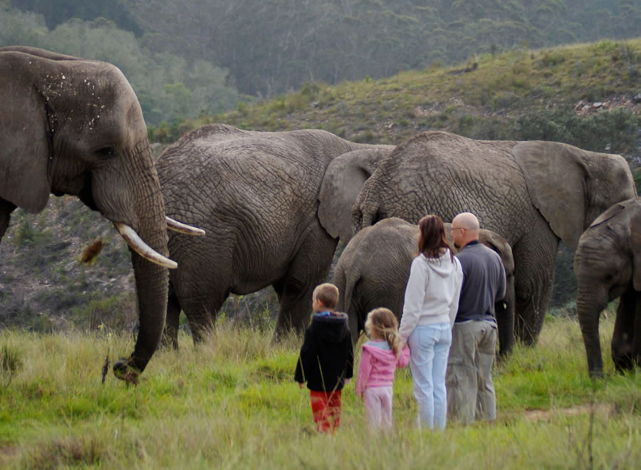 knysna-elephant-park-Harry and family_daily tour