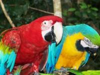 Monkeyland, Birds of Eden & Jukani Wildlife Sanctuary