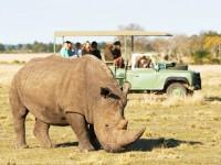 10% OFF Safaris in Plett