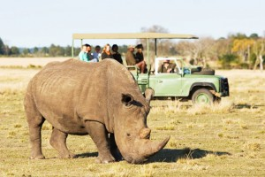 Plett Game Reserve - Game Drive, safari in Plettenberg Bay