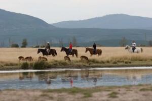 Plett Game Reserve - horseback horse safari in Plettenberg Bay