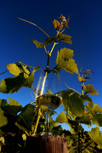 Andersons Wines in Plett