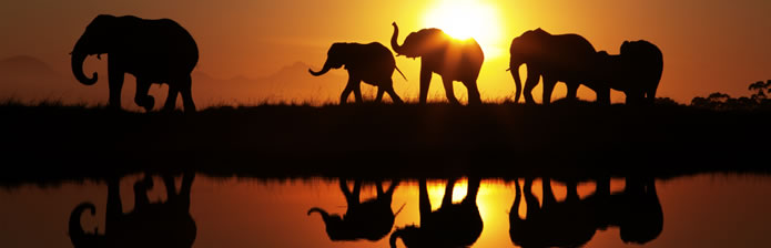 elephants-at-dawn
