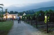 Newstead Lund Family Vineyards in Plett