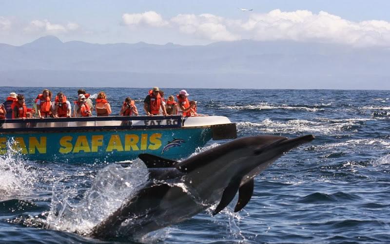 ocean-safaris