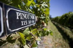 Packwood Wine Estate in Plett
