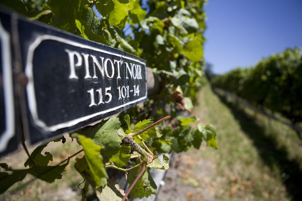 Packwood Wine Estate in Plett