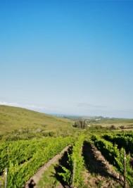 Plettenvale Wine Estate