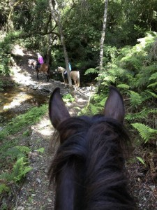 Hog Hollow Horse Trails in Plett