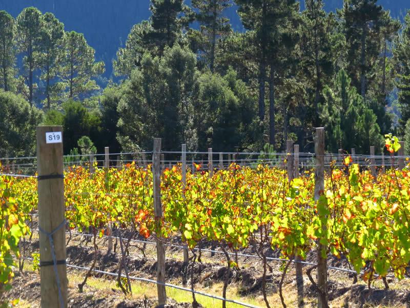 Lodestone Wines