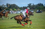 Polo in Plett