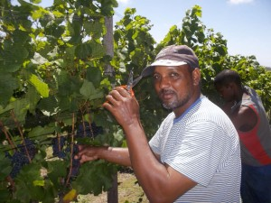 Denver busy picking