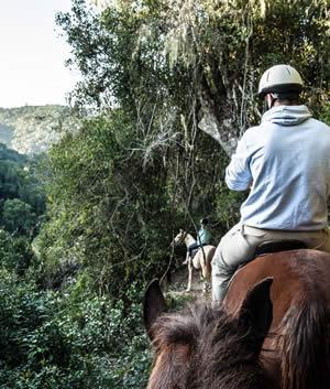 Hog Hollow Horse Trails
