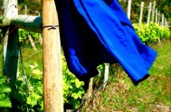 labourer's jacket vines