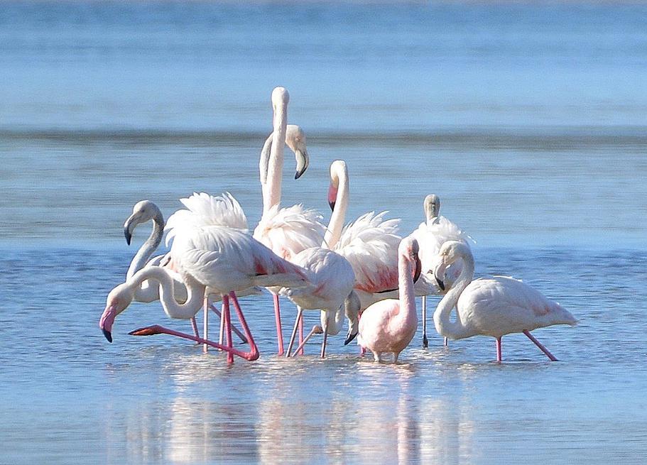 Plett Birding Route