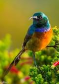 Birding on Robberg