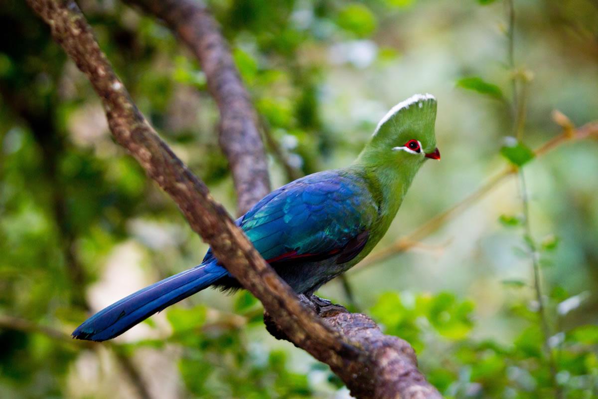 Birds Of Eden « Birds Of Eden Plett Tourism