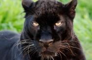 bleopard jukani wild cat sanctuary - plettenberg bay south africa 3