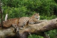 jukani wild cat sanctuary - plettenberg bay south africa 4