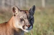 jukani wild cat sanctuary - plettenberg bay south africa 6