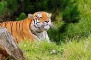 jukani wild cat sanctuary - plettenberg bay south africa 8