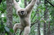 monkeyland-Atlas(Aris 03-2009