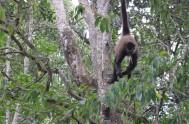 monkeyland-IMG_6243