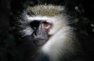 monkeyland-Nancy_MonkeyLand_124