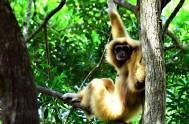 monkeyland-Siam - ML