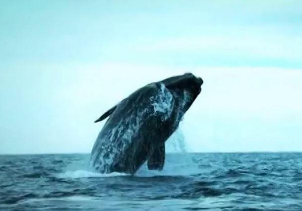 ocean-blue-adventures-whale-video