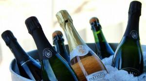 Discovering Plett's Emerging Wine Industry...