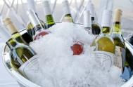 sasfin-plett-wine-and-bubbly-festival-1-9001