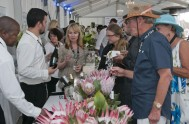 sasfin-plett-wine-and-bubbly-festival-1-9272