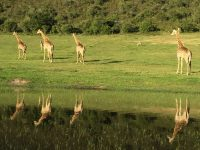 Giraffe View Safari Camp