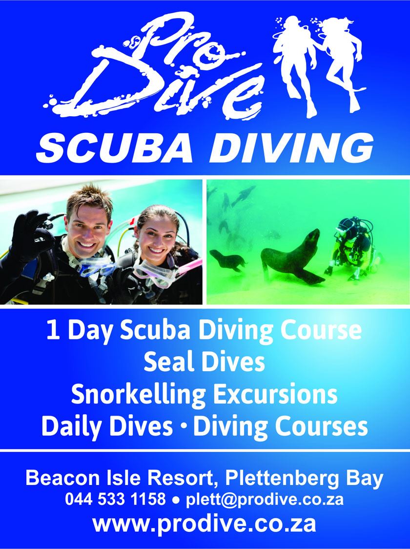 One day scuba diving course