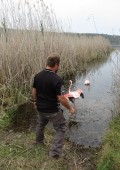 Flamingos rehabilitated & released after injury