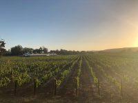 Bitou Vineyards