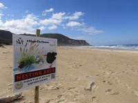 Shorebird Conservation in Plettenberg Bay