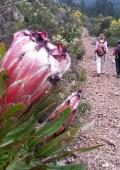 Summer on The Plett Trail