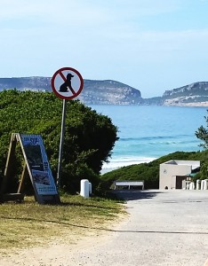 No dogs allowed on Robberg 5 Beach in Plett, and other beaches