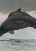 Golf Open supports Humpback Dolphin