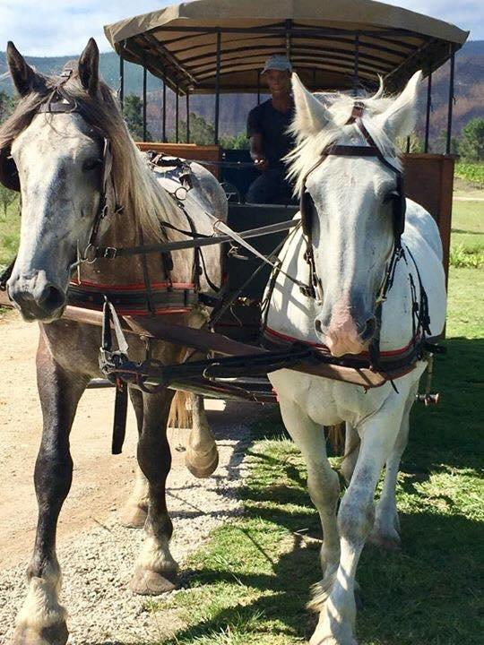 horse-carriage-wine-trail
