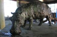 bronze-fields-sculptor-robbie-leggat-IMG_5596