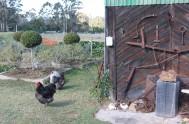 bronze-fields-sculptor-robbie-leggat-IMG_5629