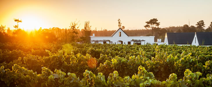 Wine Estates in Plettenberg Bay