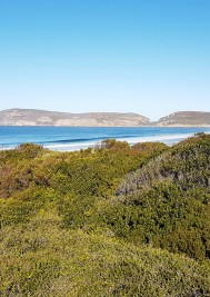Independent UK says Plett an alternative in Cape Town drought