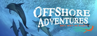 Swim with sharks, seals and sardines in Plett | Offshore Adventures