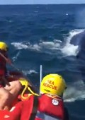 Video: Whale rescue, freed from rope
