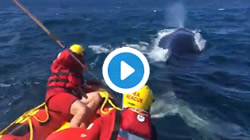 Whale rescued near Plett, tangled in rope from fishing buoy