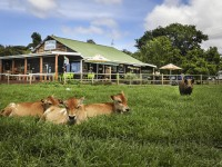 Natures Way Farm Stay Accommodation
